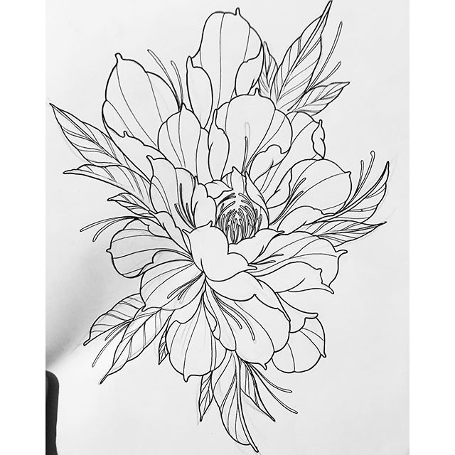 Peony Line Drawing Tattoo : Studies would love to do something simular peony tattoo