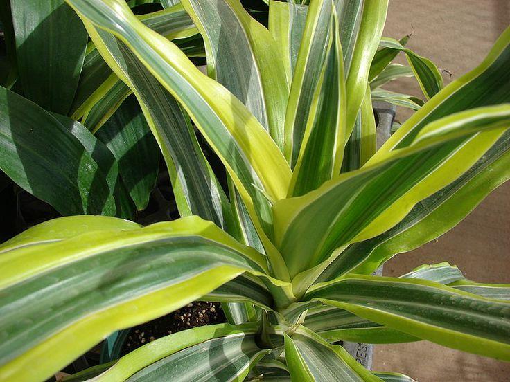 Adaugă Pin Pe Flori Si Plante De Apartament