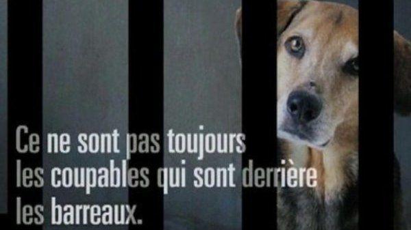 Pétition · Faire créer un logiciel regroupant tous les propriétaires ayant fait acte de maltraitance sur animaux afin d'avoir connaissance de leurs actes dans toutes les associations animales et cabinets vétérinaires · Change.org