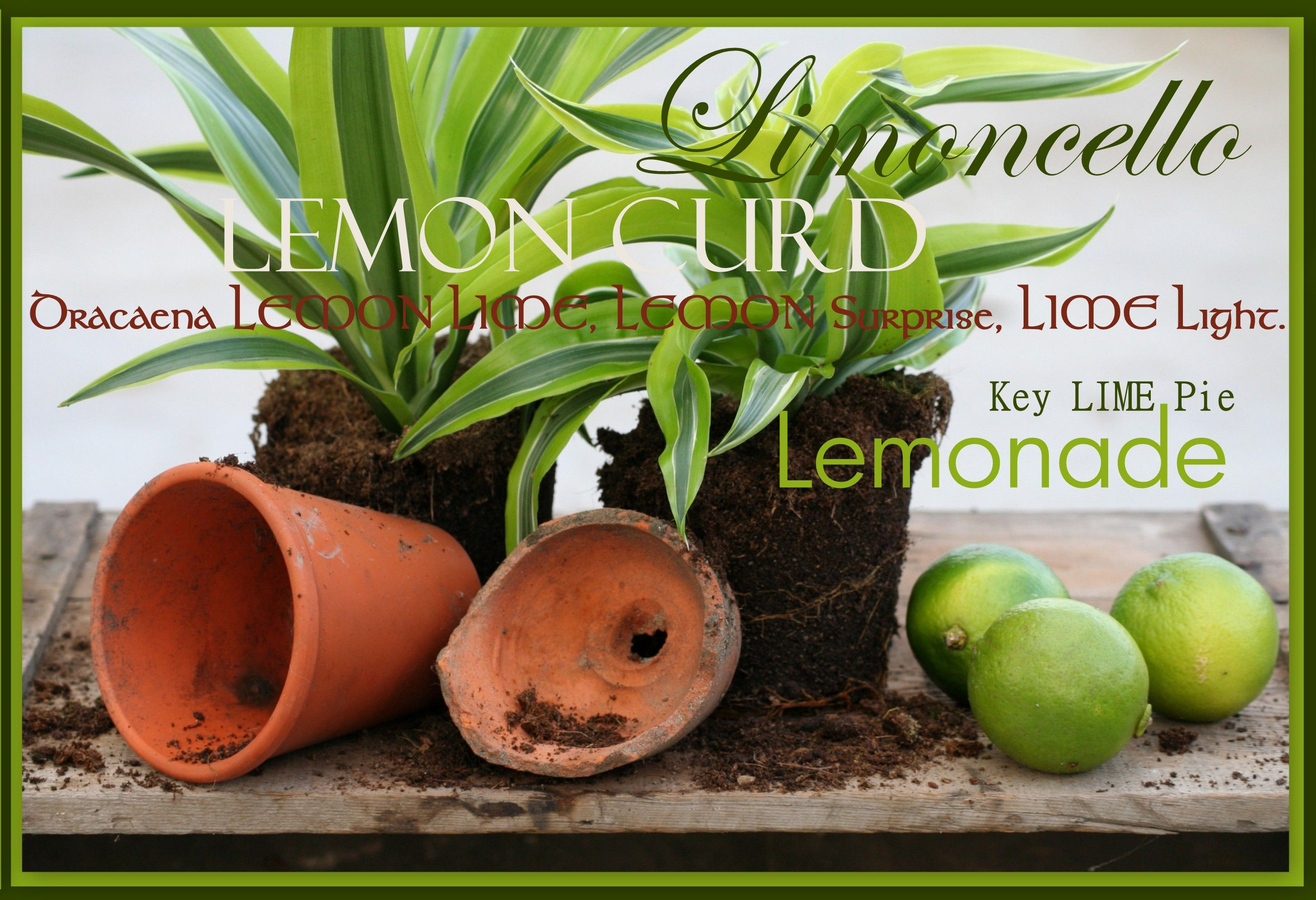 Are you in a LEMON òr a LIME mood, this Summer ?!
