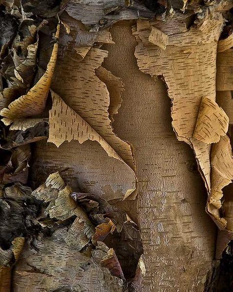 .Ecorces d'arbres