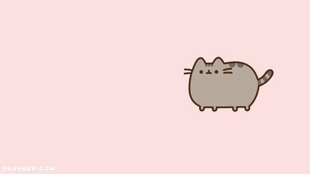 Places That Cats Belong!
