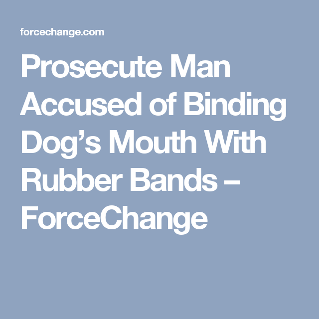 Prosecute Man Accused Of Binding Dog's Mouth With Rubber