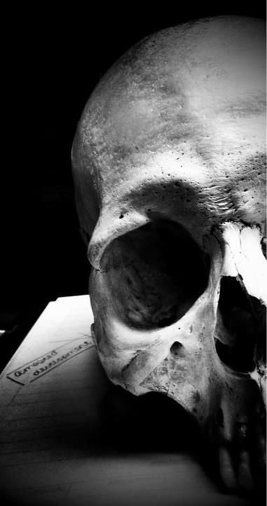 Skulls Black White Photography Erie Contrast Detail