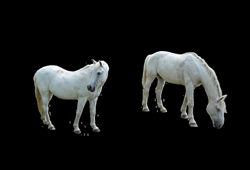 2 White Horses Png By Https Chaseandlinda Deviantart Com On Deviantart Completely Free To Use White Horses Horses Png