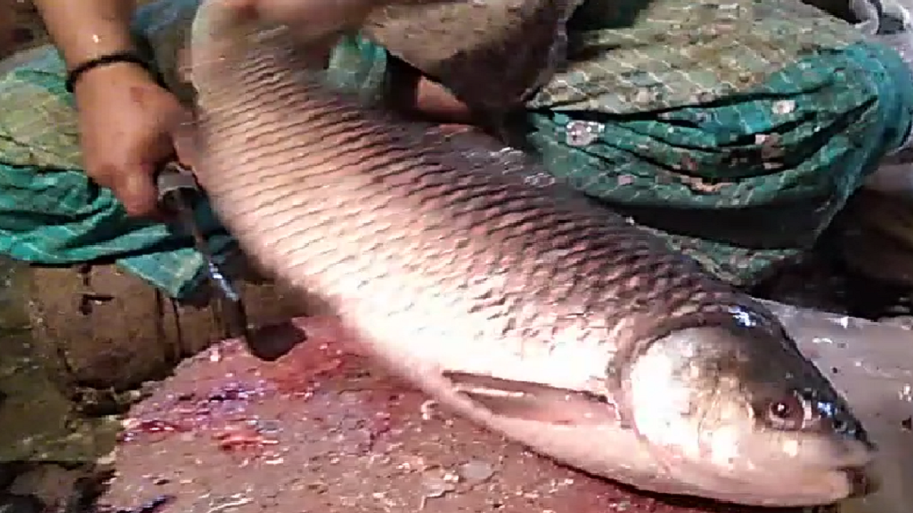 Pin On Amazing Fish Cutting