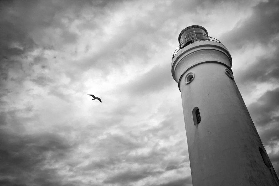 Light House Bird by Jurie van Dyk, via 500px