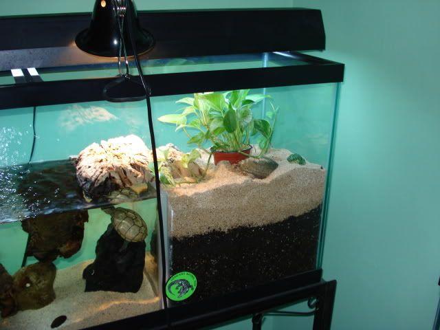 Sand Turtle Tank Ideas Google Search Turtle Tank Turtle Tank