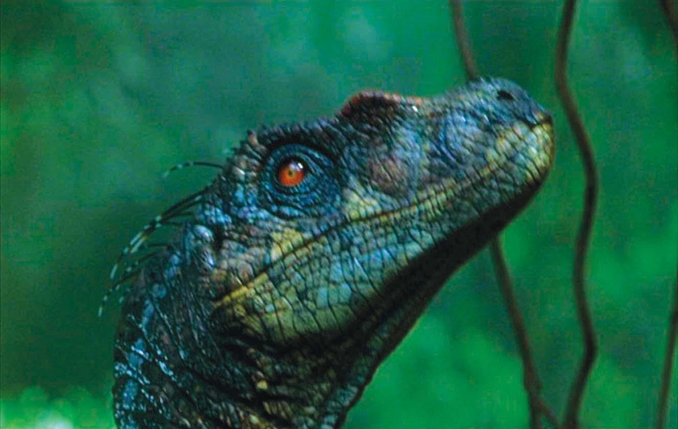 velociraptor jurassic park - Google Search | Raptor Squad ...