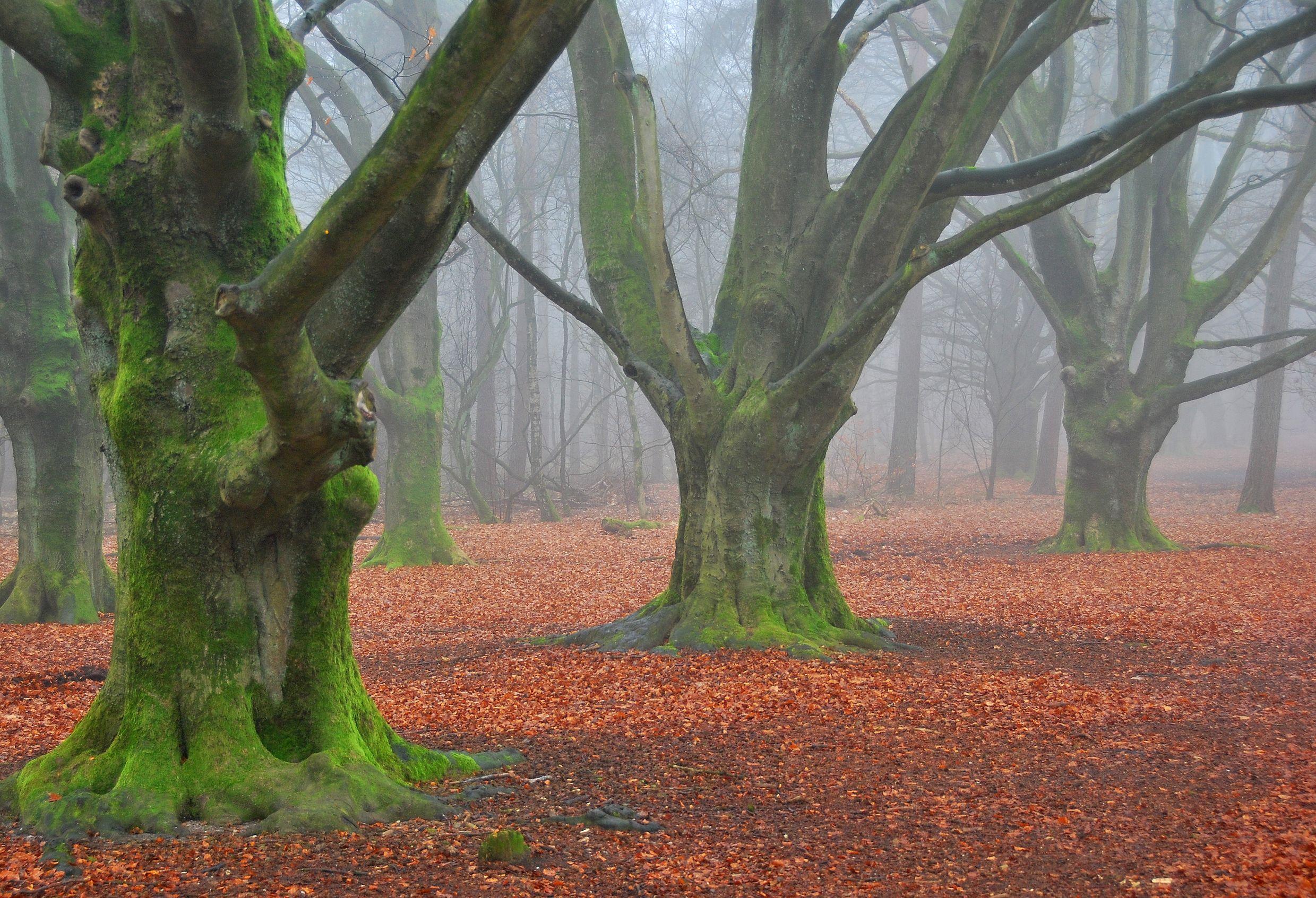 Scaricare Gli Sfondi Foresta Alberi Nebbia Sfondi Gratis Per La Risoluzione Del Desktop 2479x1693 Immagine 561120 Paesaggi Sfondi Nebbia