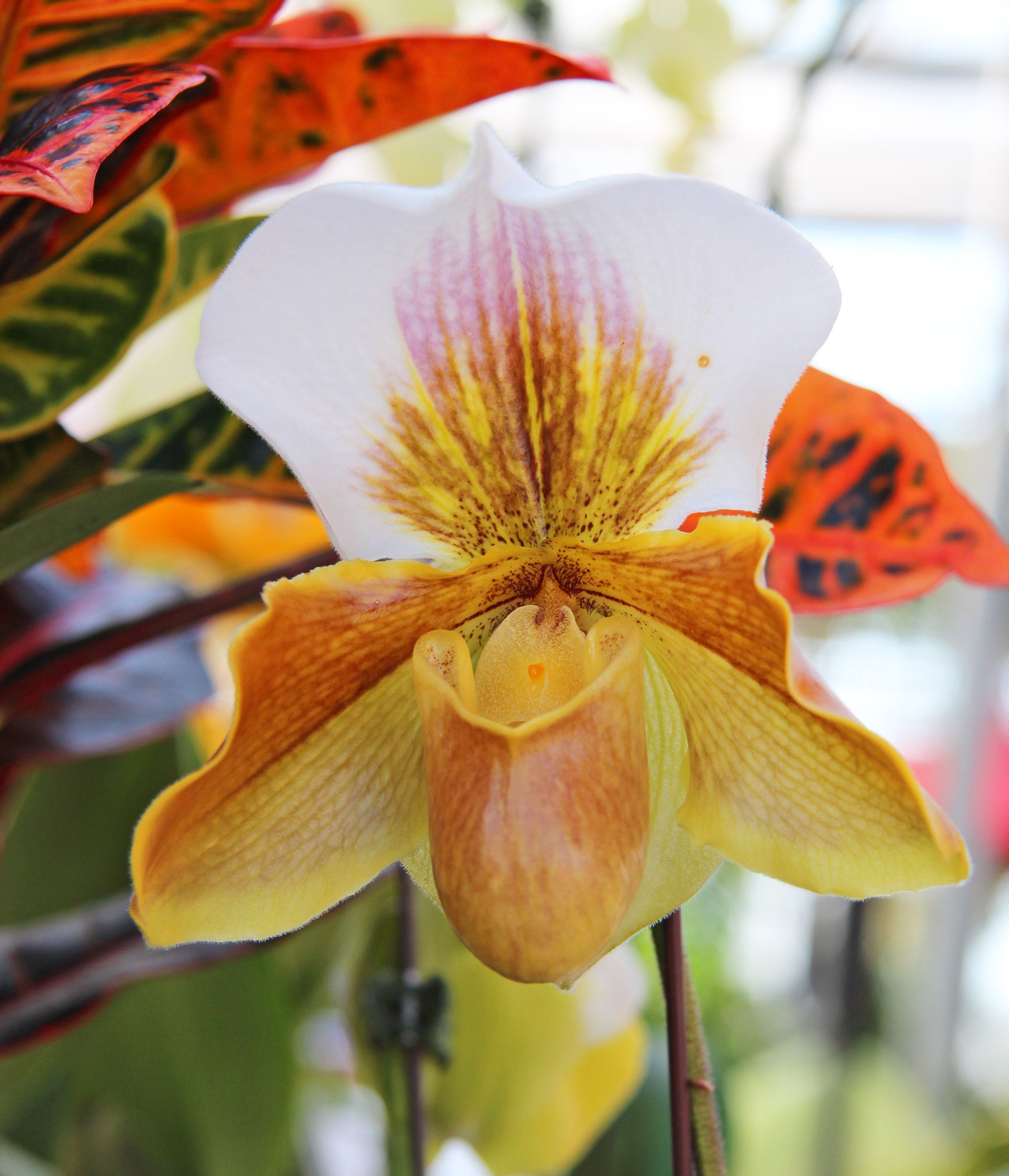 Orchids gardenstory pinterest orchid flowers and plants