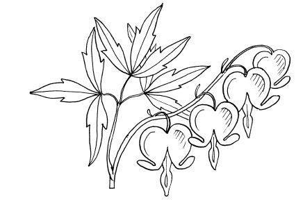Disentra Jpg 426 288 Heart Flower Tattoo Bleeding Heart Tattoo Bleeding Heart Flower