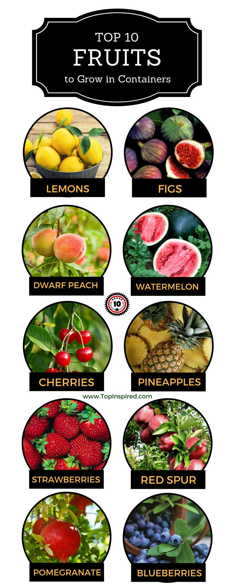 Top 10 Fruits You Can Grow In Containers Top Inspired Indoor Fruit Trees Indoor Fruit Fruit Garden