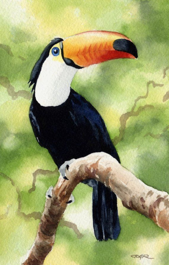 Dj Rogers Watercolor Peinture Oiseau Oiseau En Aquarelle Art A