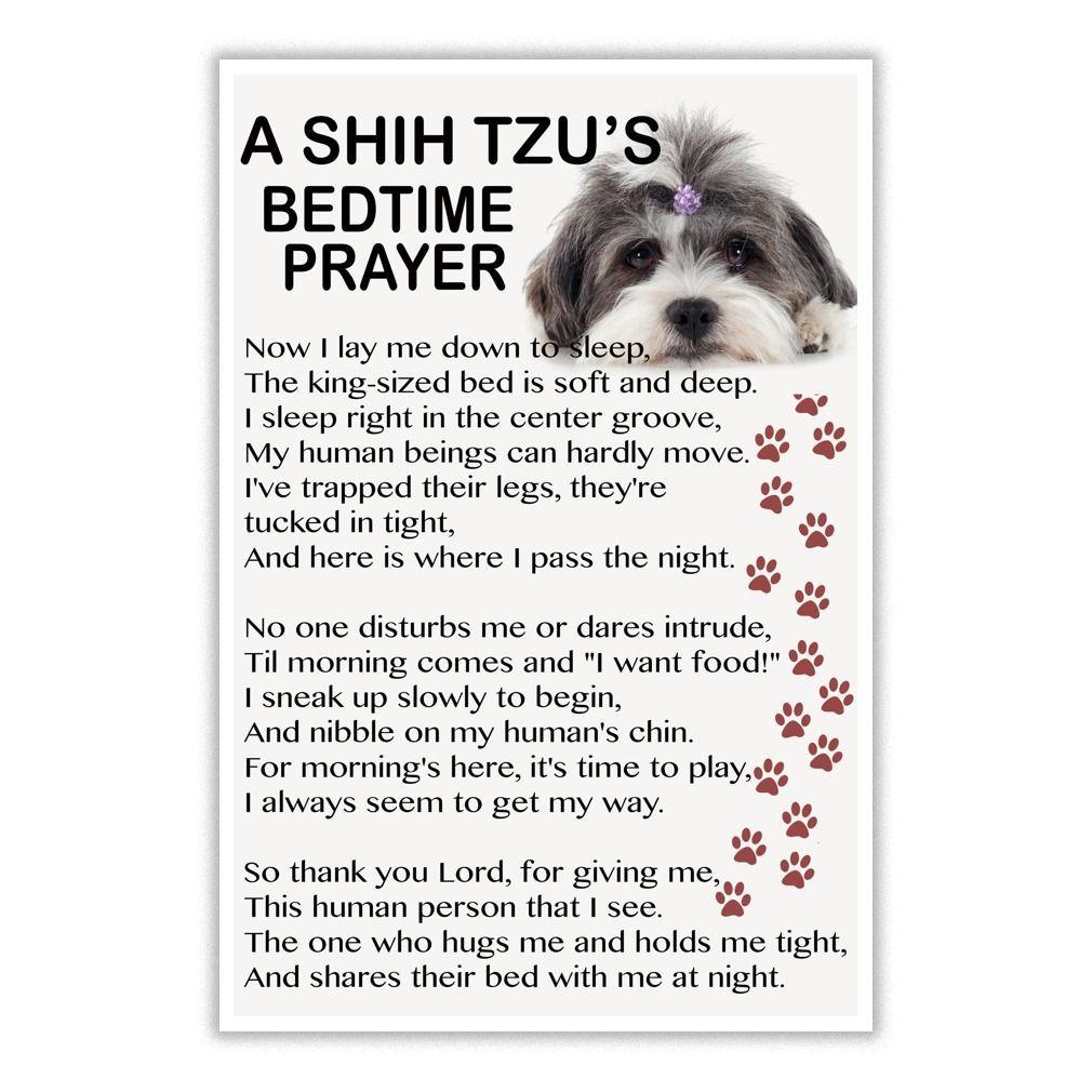 Love Shih Tzu Shih Tzu Puppy Shih Tzu Dog Shih Tzu