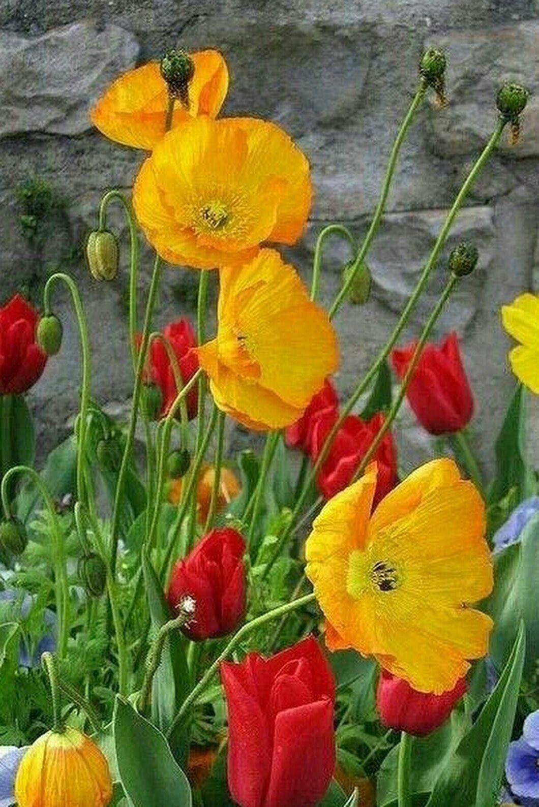 Https Twitter Com Mit Bildern Schone Blumen Blumen Blumen Pflanzen