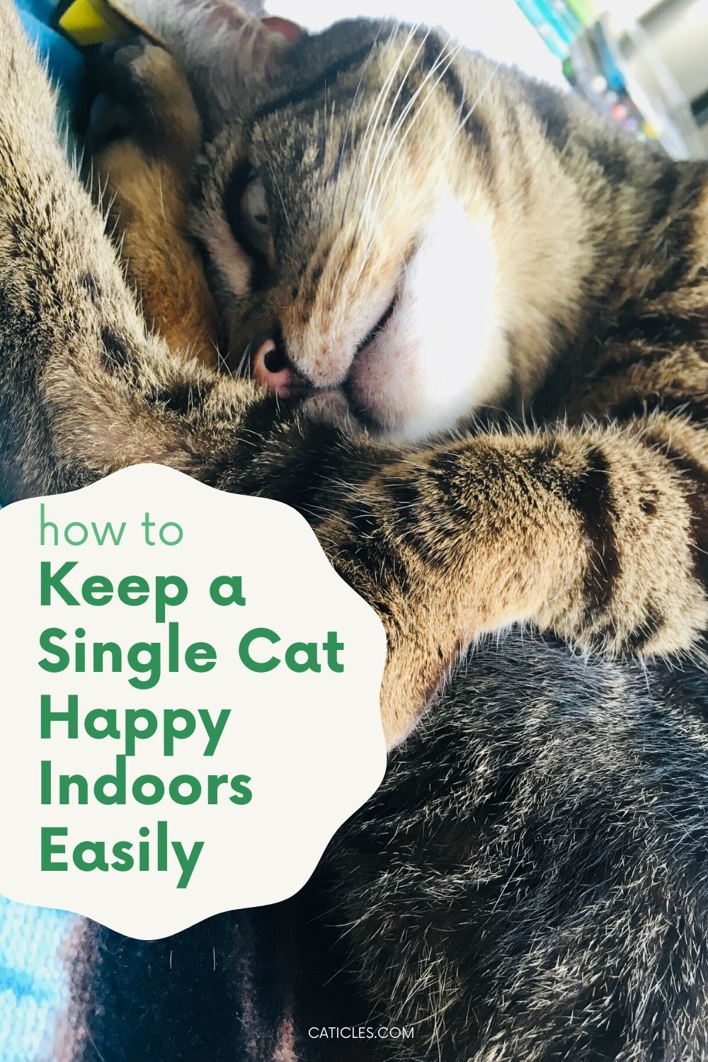 7 Single Cat Household Hacks That Make Your Cat Less Lonely Caticles Cats Cats And Kittens Kitten Care