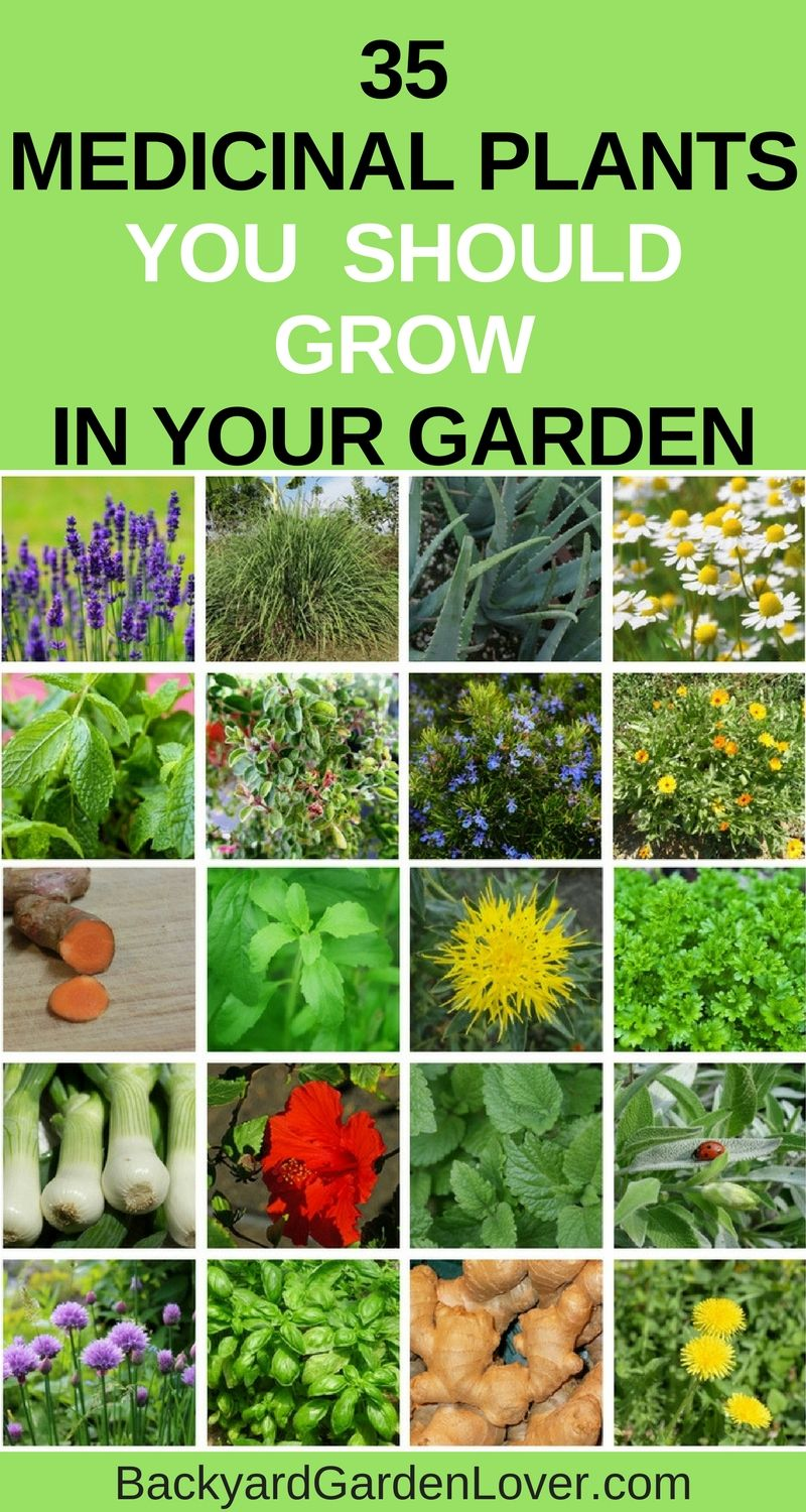 Grow a few of these medicinal plants in your garden: they're beautiful, and will come in handy when you need natural remedies for your family #gardening #naturalremedies #medicinalplants #herbs #organic #ediblegarden