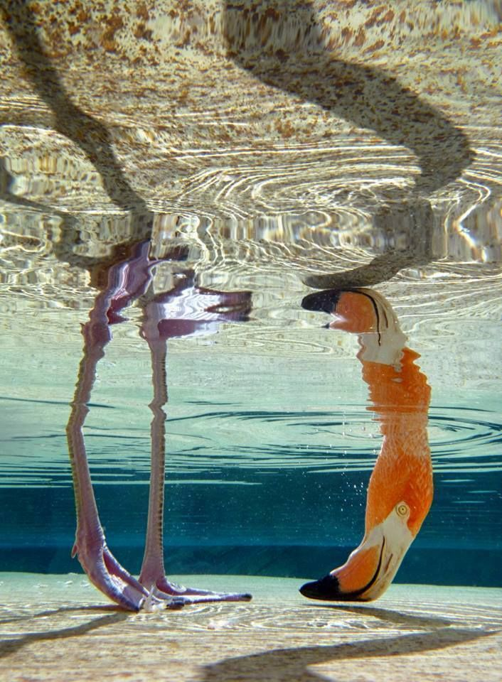 Flamingo by Frans de Waal. ❣Julianne McPeters❣ no pin limits                                                                                                                                                      More