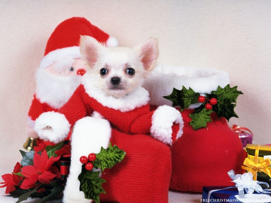 Cute Merry Christmas Wallpaper Cats And Dogs | One Letter