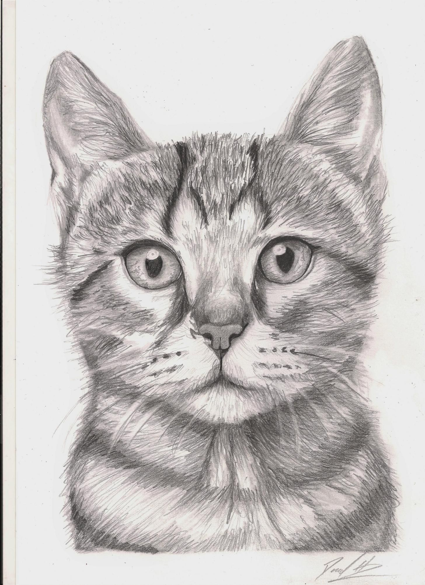 Scaredy Cat Pencil A4 Kitten Drawing Pencil Drawings Realistic Drawings