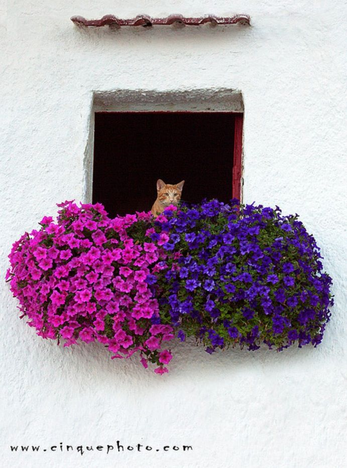 Photo Sharing Window Boxes Cats Painting