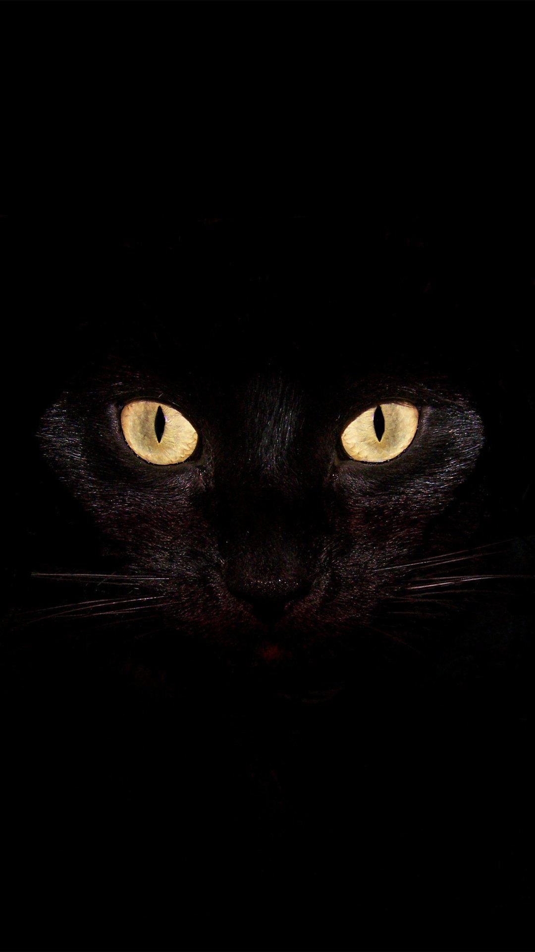 Scary Halloween Background Black Iphone 6 Plus Wallpaper Cat Background Black Cat Eyes Black Cat