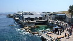 Monterey Bay Aquarium- great place to visit if you can.