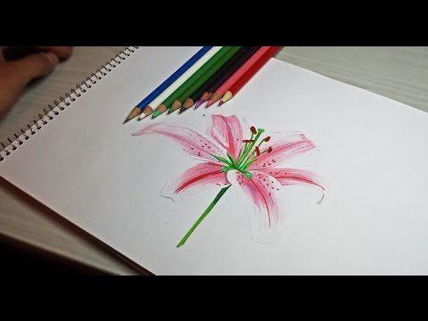 Para Tu Mamá Como Dibujar Una Rosa Con Lapices De Colores