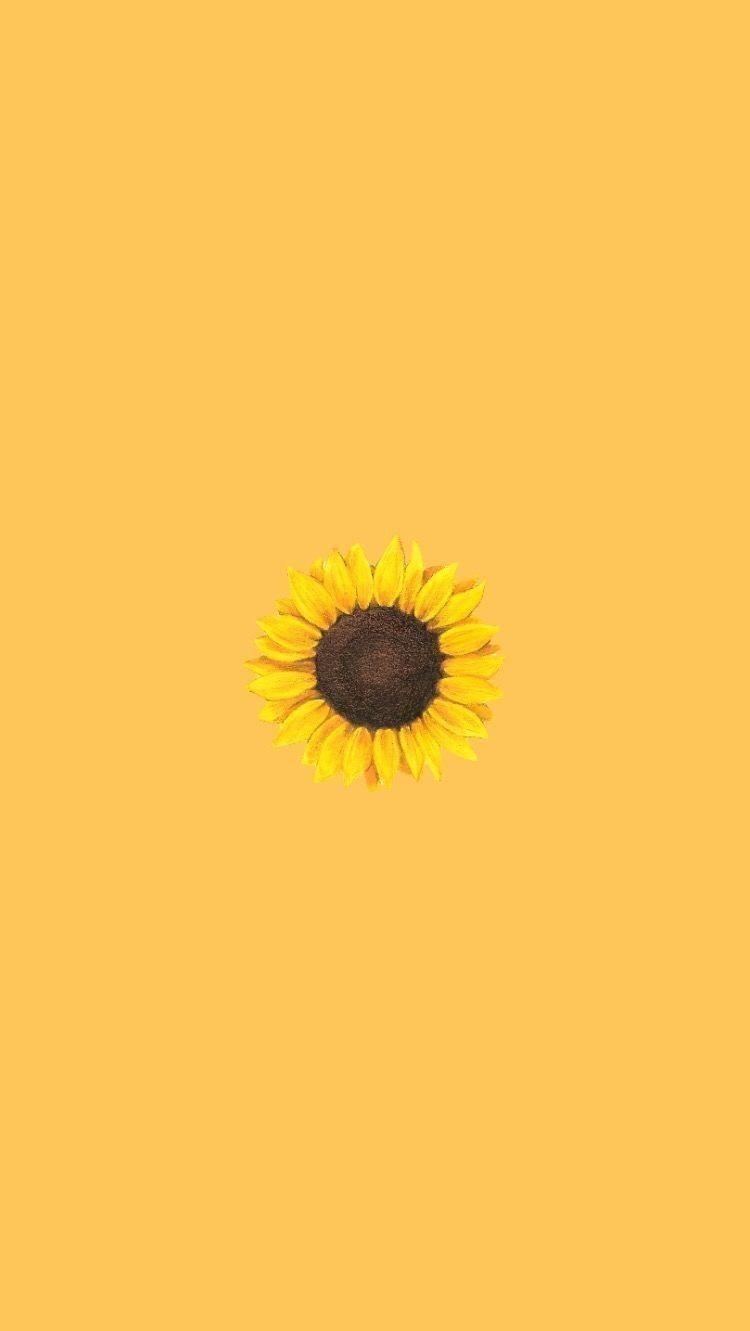 Aesthetic Fur Iphone Wallpapers Wallpaper Cave Asthetische Sonnenblume Iphone Gelbe Sunflower Wallpaper Iphone Wallpaper Yellow Yellow Wallpaper