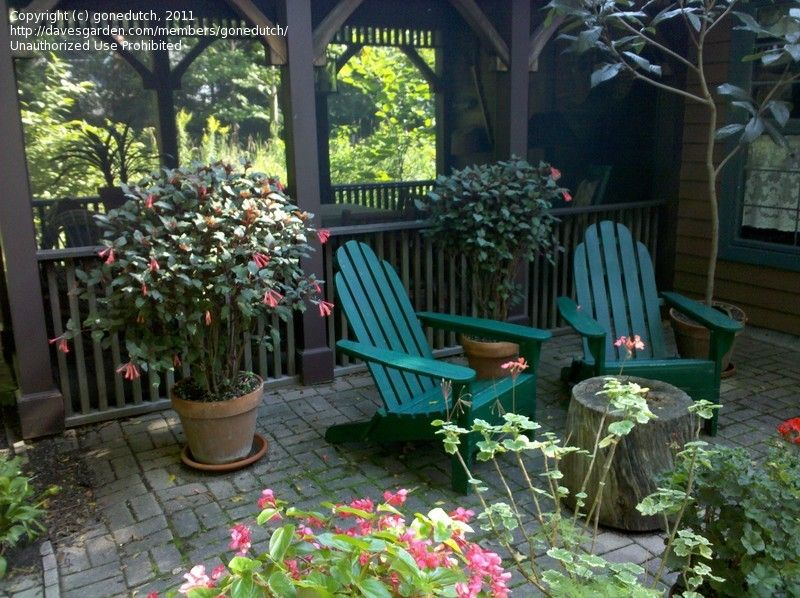 Best 25 Cottage Patio Ideas On Pinterest Country Style