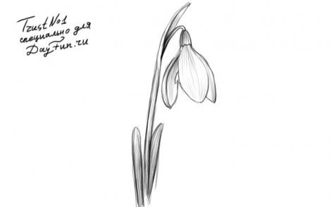 How To Draw A Snowdrop Step By Step Flower Drawing Flower Drawing Tutorials Drawings