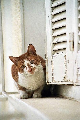 Stray Cat In Kairouan Tunisia Animals Of The World Stray Cat Cats