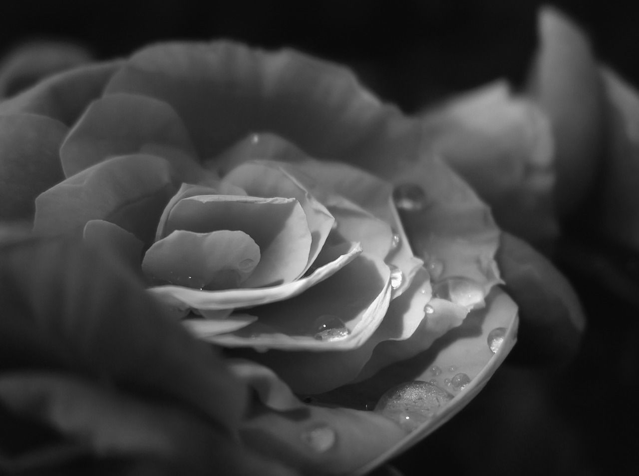 By denny bitte Çiçeklerim pinterest