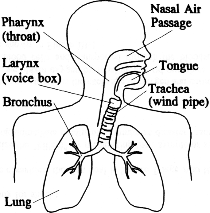 Figure III-l. Components Of The Respiratory System