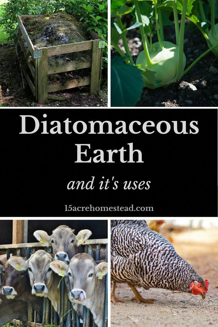 Diatomaceous Earth and Its Uses. 15 Acre Homestead