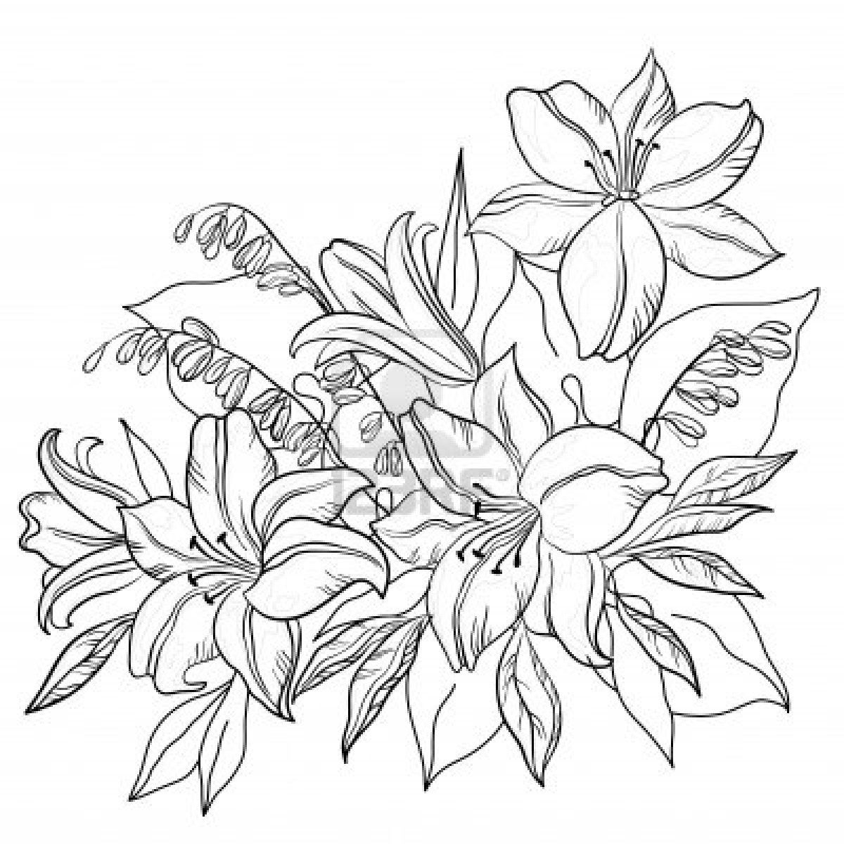 Lily Flower Drawing Outline Sketch Coloring Page Flower Coloring Pages Flower Drawing Coloring Pages