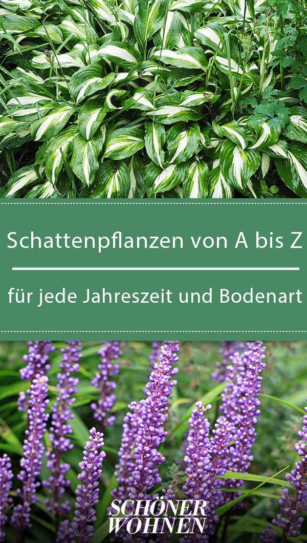 Schattenpflanzen & Schattengewächse von A-Z #blumenfürgarten