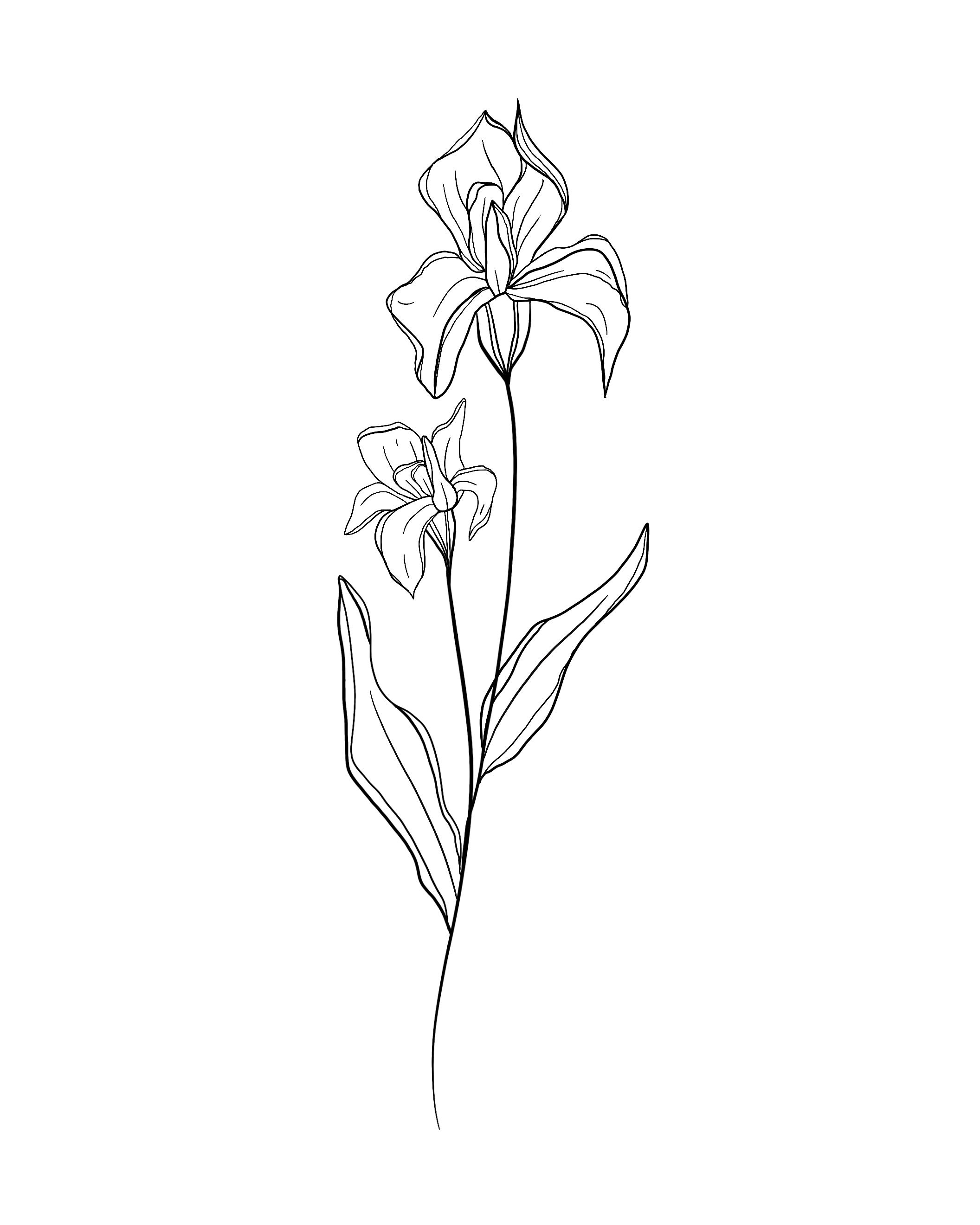 Birth Month Flowers | Iris | February