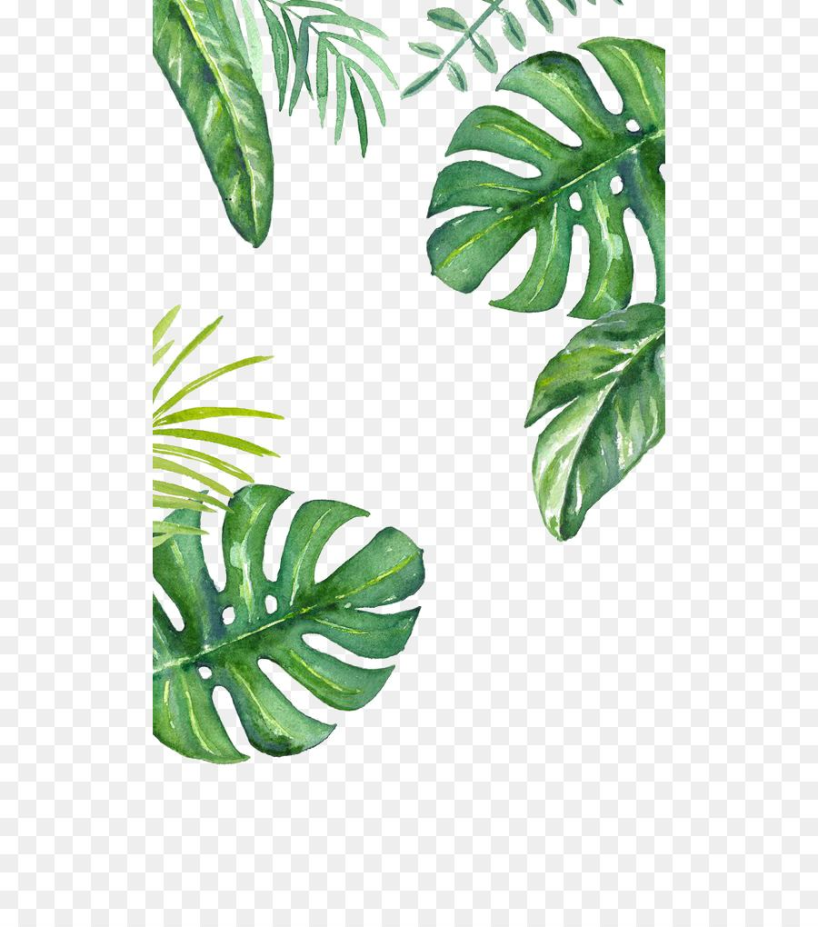Banana Leaf Wallpaper Green Background Png Is About Is About Leaf Plant Tree Plant Stem Banana Leaf Banana Leaf Wallpaper Green Background Tropis Daun