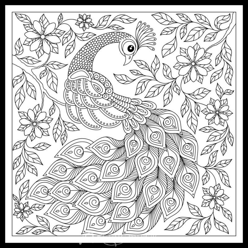 Peacock Doodle 2 Click To Zoom Peacock Coloring Pages Bird Coloring Pages Peacock Drawing Images