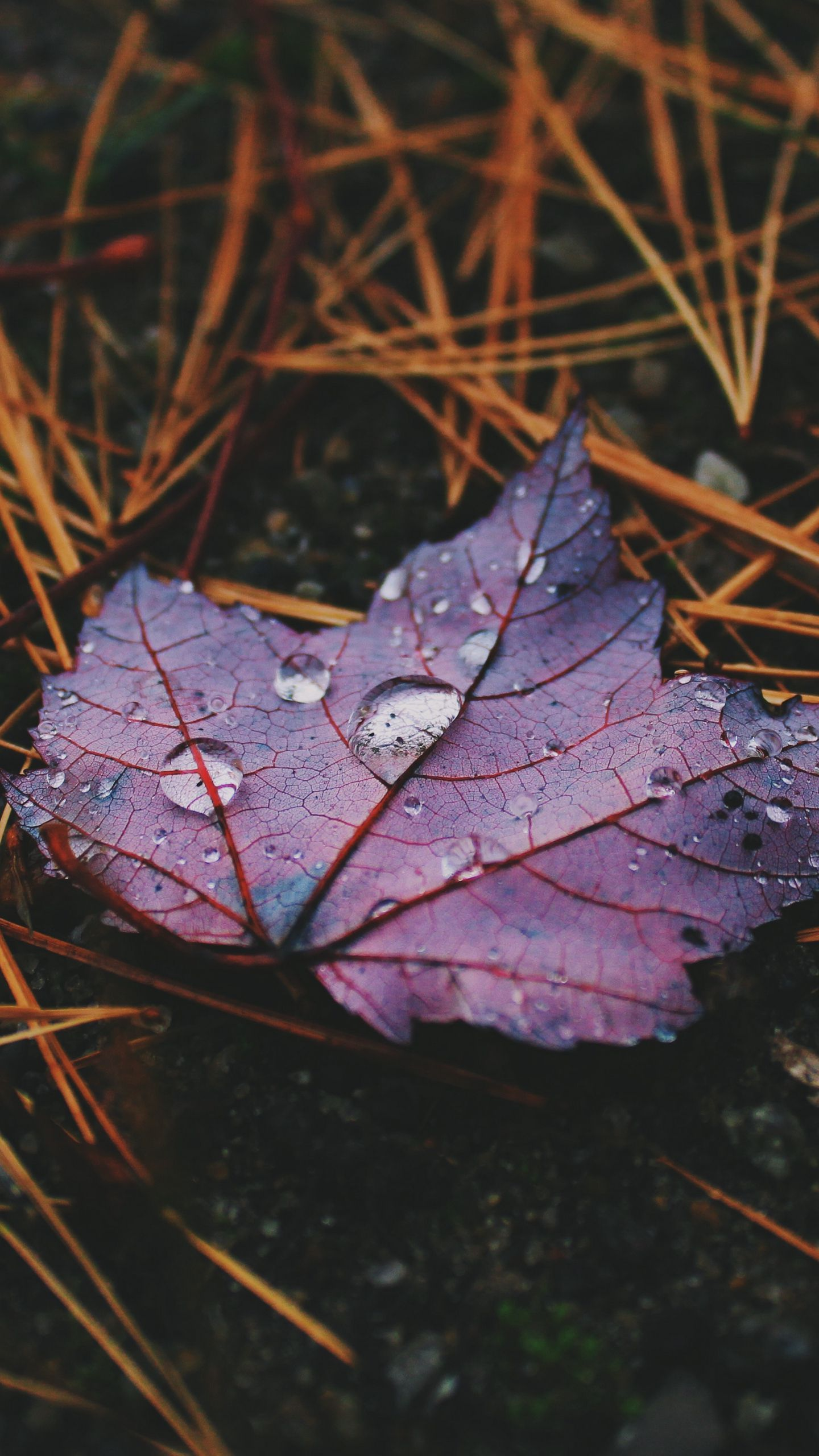 See My Collection Of Awesome Iphone And Android Fall Wallpapers And Background Images In Ultra High Definition In 2020 Wallpaper Fall Wallpaper Smartphone Wallpaper