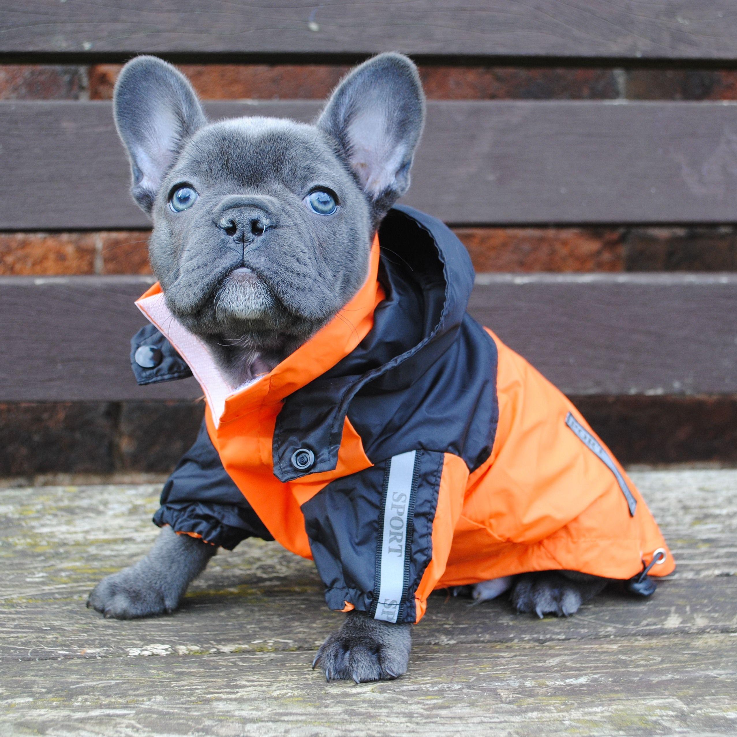 Dog Breed French Bulldog Popular dog names, Dog names