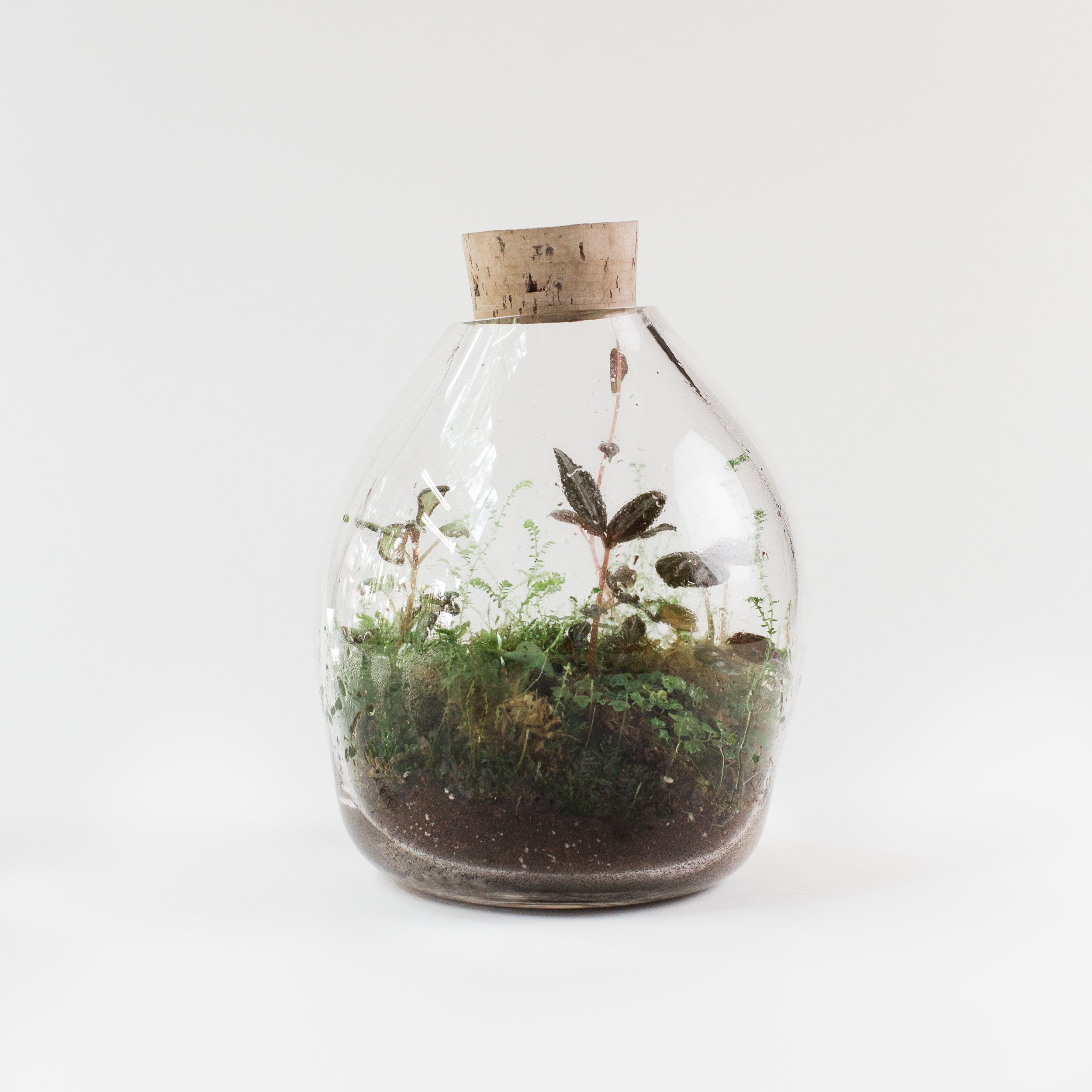 Ava Rooseveltsstudio 1 Jpg Terrarium Plastic Bottle Greenhouse