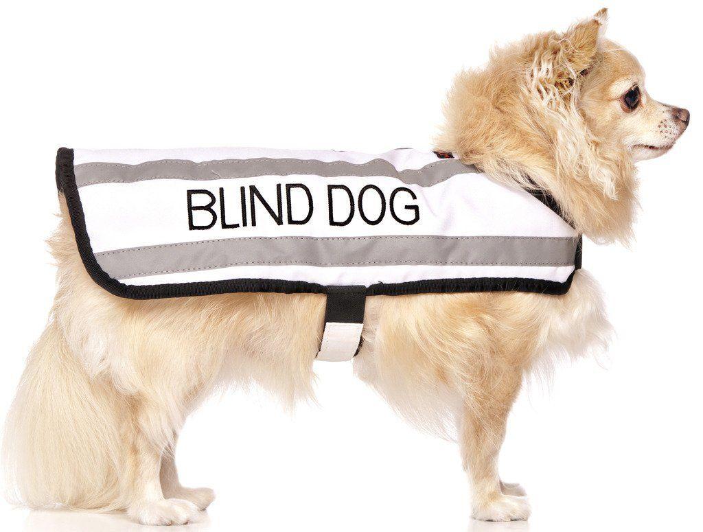 Blind Dog Collars And Harnesses Warm Dog Coats Dogs Dog Coats
