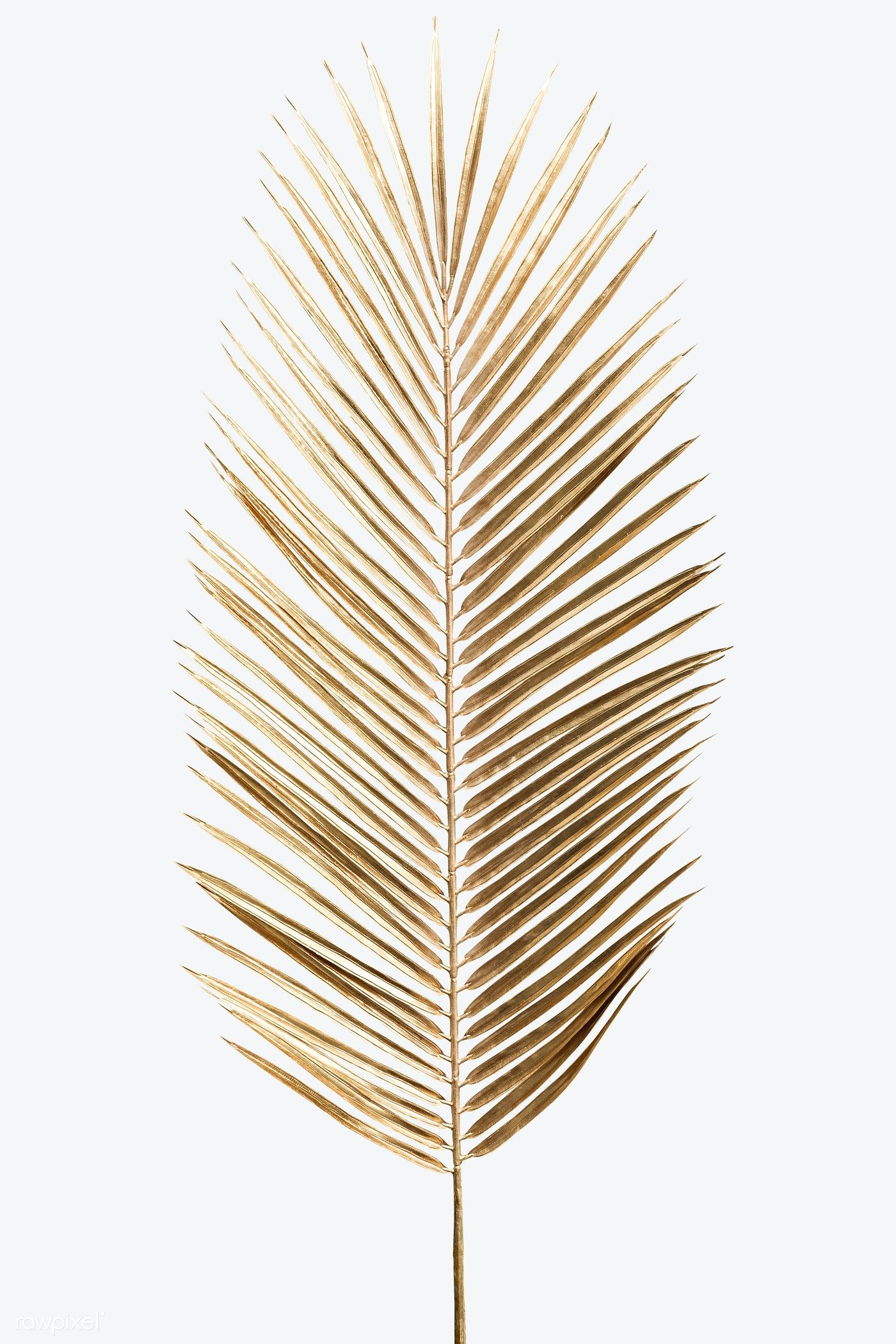 Download Premium Image Of Areca Palm Leaf Painted In Gold On An Off White Palm Leaves Painted Leaves Leaf Wallpaper