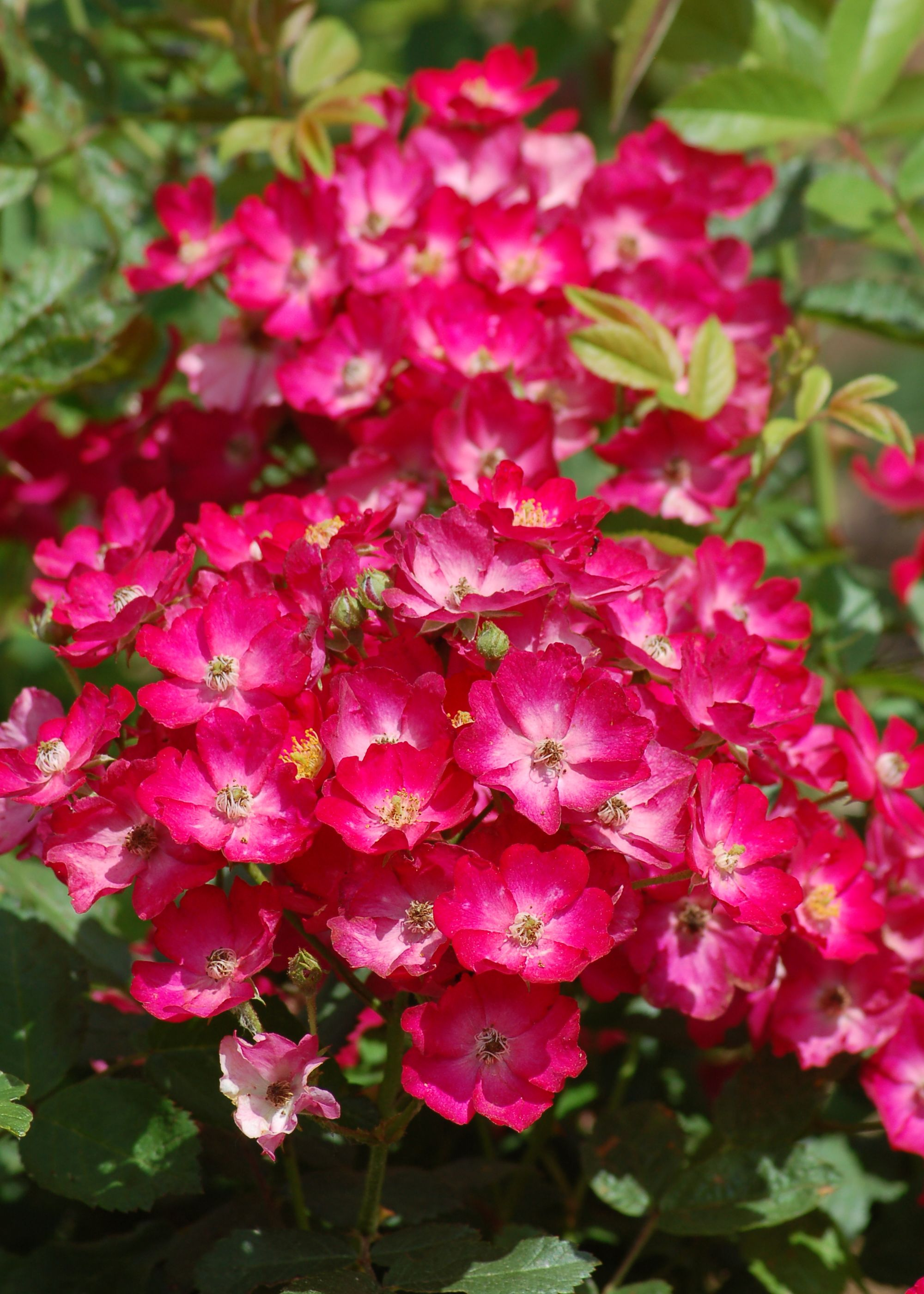 11 Plants to Grow in Flower Beds to Achieve Great Color | Shrub ...