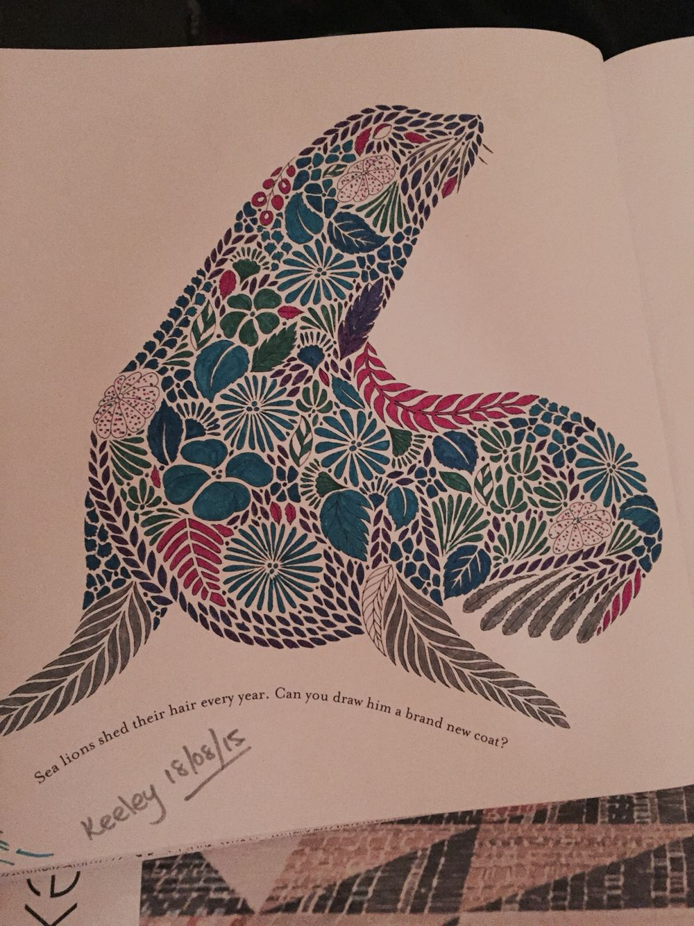 Seal From Millie Marottas Animal Kingdom Colouring Book