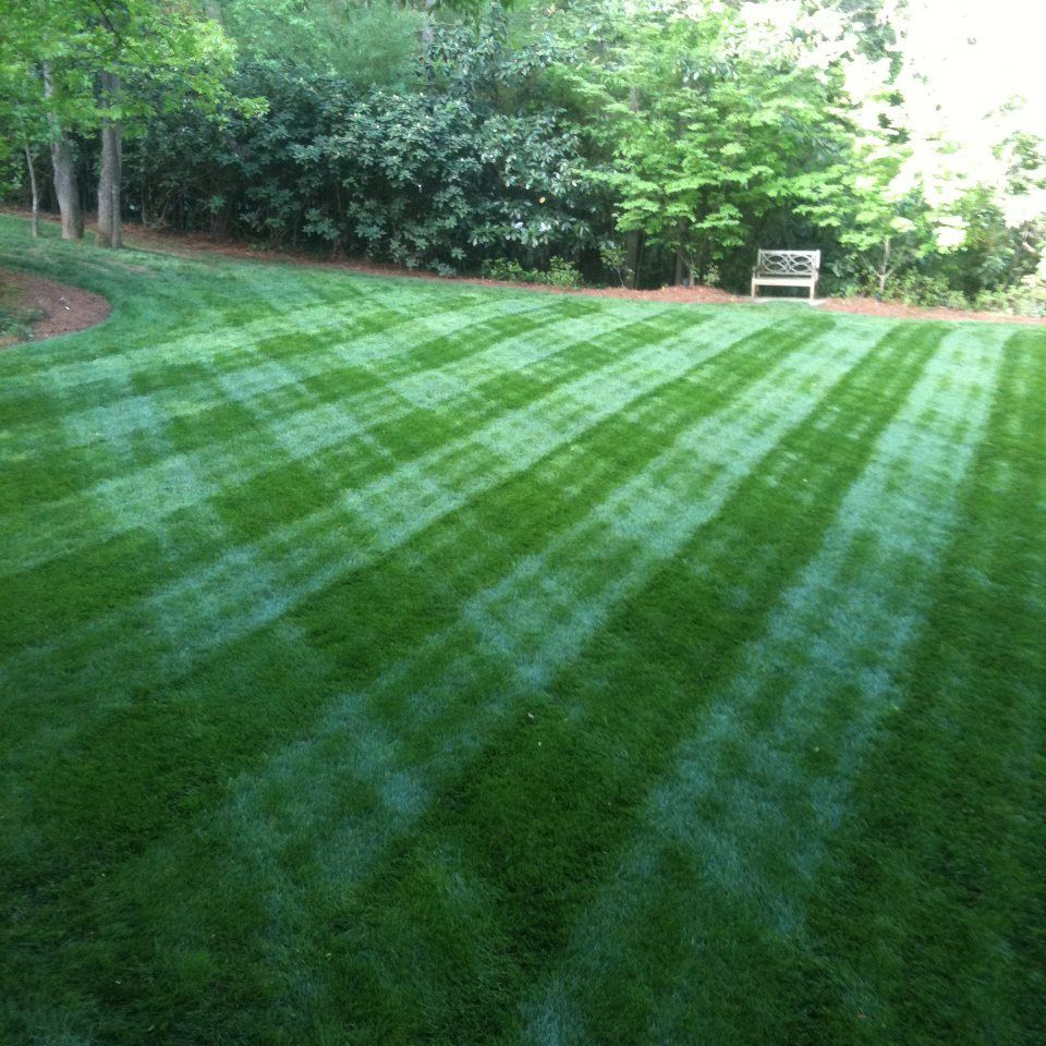 Fescue cut with a Walker Mower | Landscape | Lawn maintenance, Lawn