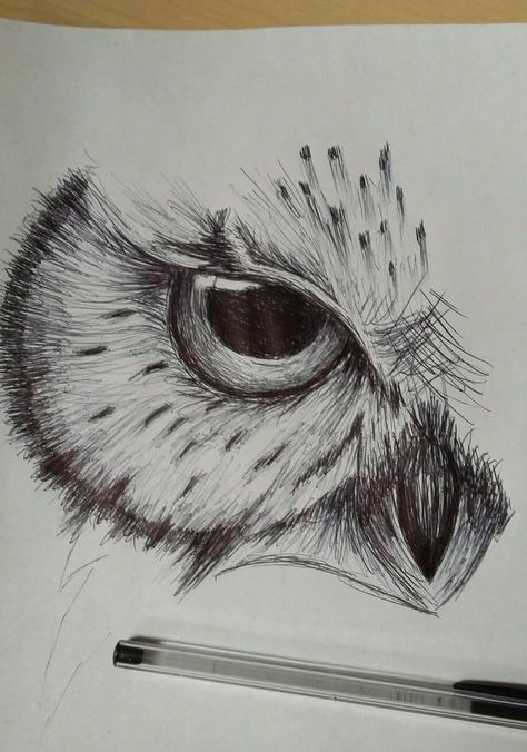 Trying to do some drawing everyday, this was a quick owl sketch done ...